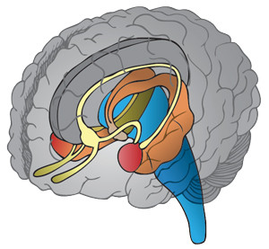 yes clinics brain