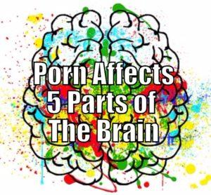 Porn Brain