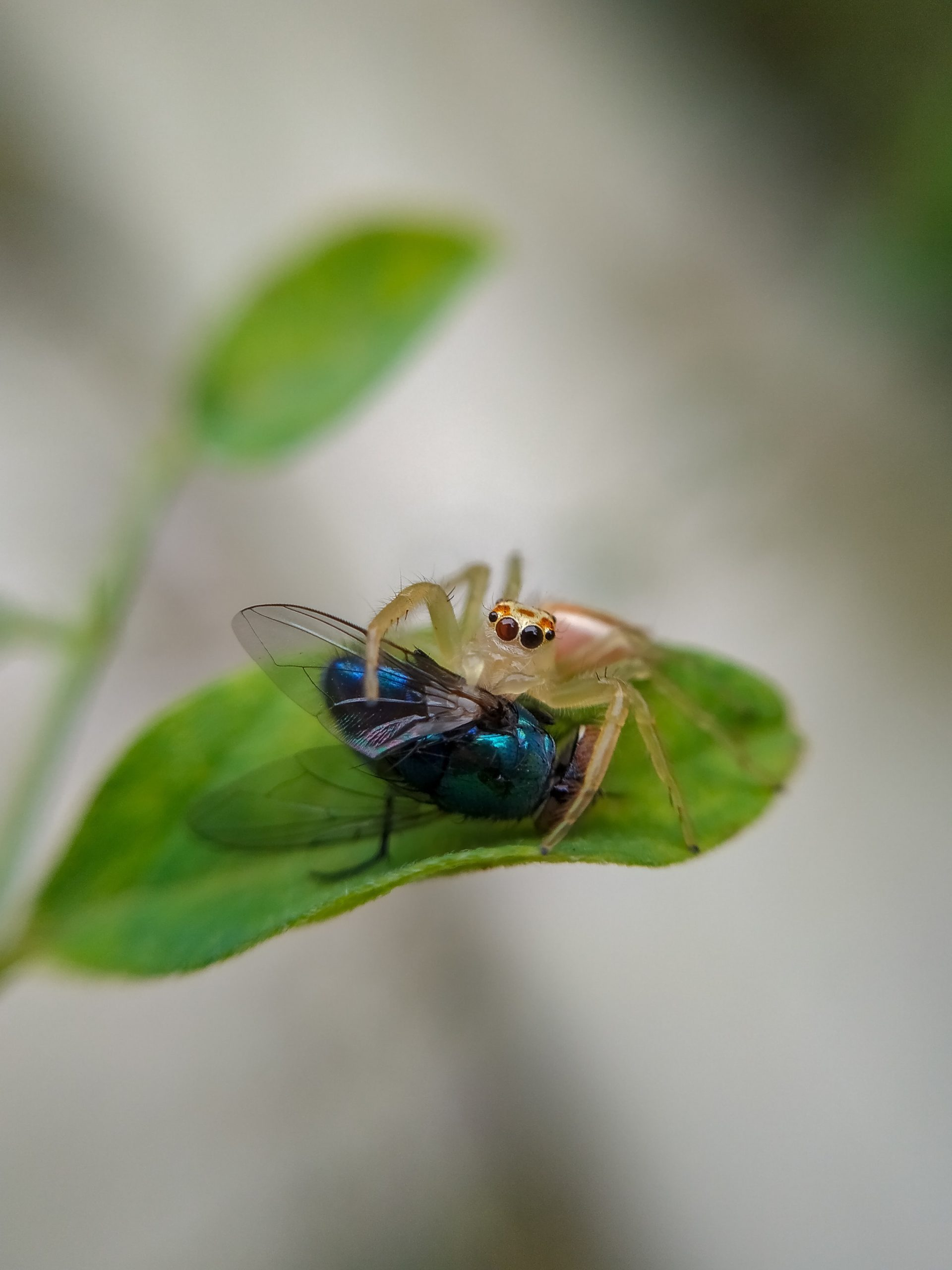microphotography of two insects on leaf